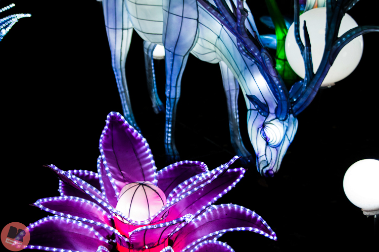 Magic Lantern Festival @ Kings Heath Park / Eleanor Sutcliffe – Birmingham Review